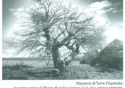 Fazenda da Torre Desesperada – amoreira onde Luísa amava rezar