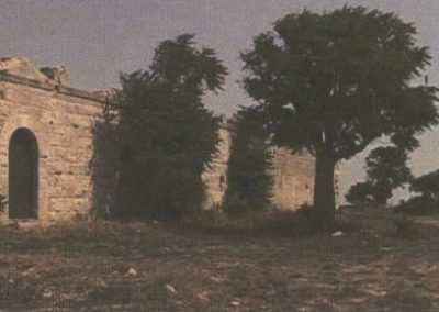 Amoreira onde Luísa se retirava para rezar